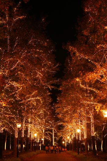 並木道(光の宮殿へと続く坂を囲む光の木々)